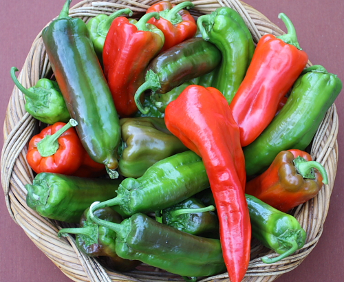Corno di Toro Rosso Red Pepper 20 seeds
